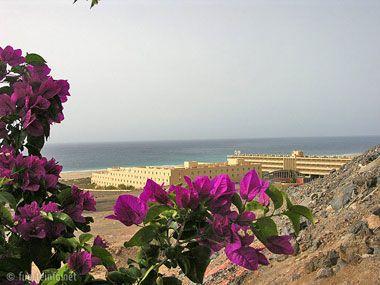 fuerteventura bilder pflanzen und tiere fuerteventura pflanzen 09