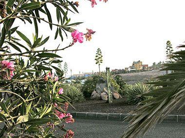 fuerteventura bilder pflanzen und tiere fuerteventura pflanzen 12