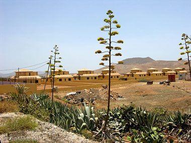 fuerteventura bilder pflanzen und tiere fuerteventura pflanzen 13
