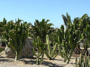 fuerteventura bilder pflanzen und tiere fuerteventura pflanzen 18