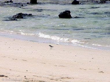 fuerteventura bilder straende playas de corralejo 25